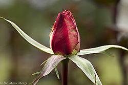 Cactus_Garden-2557.jpg