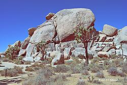 Cap-Rock-view3--in-Joshua-Tree-National-Park-PPW.jpg