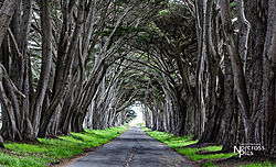 Chadwick_20190430_Point_Reyes_0009.jpg