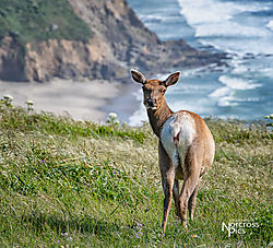 Chadwick_20190430_Point_Reyes_0153-Edit.jpg