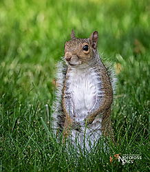 Chadwick_20200517_Squirrel_0007-Edit.jpg