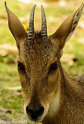 Chhatbir_Zoo-0574.jpg