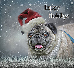 China_Happy_Holidays_Nikonians.jpg