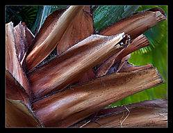 Chopped-Fronds-a1.jpg