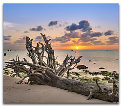 Close-Beach-Tree.jpg