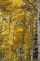 Colorado_Gold-0370.jpg