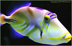 Colorful_Fish_filtered_1.jpg