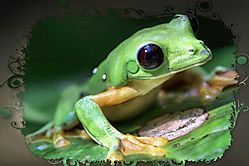 Costa_Rica_Frog4.jpg