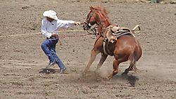 Cowboy_Pulling_Against_Horse-Exp-Sharp-2.jpg