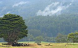 Cows_Sheltering.jpg