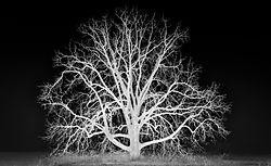 D75tree_13_of_13_-Edit-Edit.jpg
