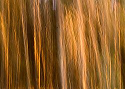 DC_Abstract_Tree_1.jpg