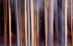 DC_Abstract_Tree_2.jpg