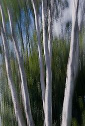 DC_Tree_Abstract_13.jpg