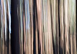 DC_Tree_Abstract_5.jpg