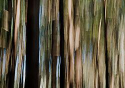 DC_Tree_Abstract_7.jpg