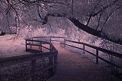 DREAM_WALK1.jpg