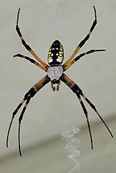 DSC0020_spider.jpg