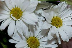 DSC0188.jpg