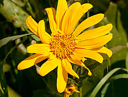 DSC1435--Wild-Flower.jpg
