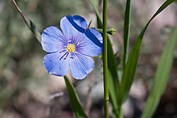 DSC1441-Wild-Flower--Purple.jpg