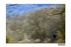 DSC3087_edited-1.jpg