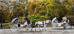 DSC_0714_Autumn_in_Central_Park_1.jpg