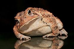 DSC_0764_toad.jpg