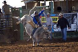 DSC_1178_Josh_Garner_Bull_rider_rodeo_.jpg