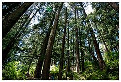 DSC_2267-tree4.jpg
