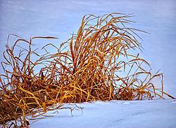 DSC_4688-low-key-crop-web_.jpg
