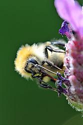 DSC_6136_Bee_sp_2.jpg