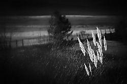 DSC_9299_Snapseed-Edit.jpg