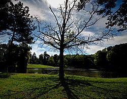 DYING_TREE_JAYCEE_PARK.jpg