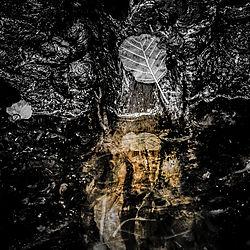 DarkNature1_25x25cm.jpg