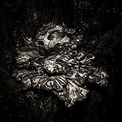 DarkNature2_25x25cm.jpg