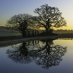 Dawn_at_the_Great_Western_Canal.jpg