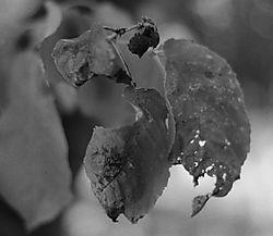Dead_Leaves.jpg