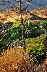 Dead_Tree1.jpg