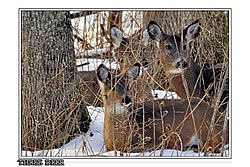 Deer_500mm_f8_71_crop_frame.jpg
