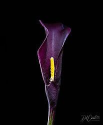 Denise_Bag_Bouquet-9.jpg