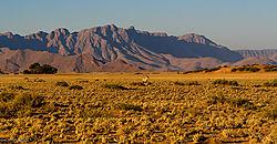Desert_Oryx_1_of_1_.jpg
