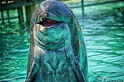 Dolphin_Sea_World_San_Diego.jpg
