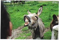 Donkey_Oatie.jpg