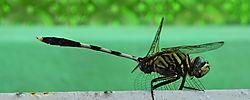 Dragonfly110.jpg