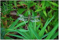 Dragonfly12.jpg
