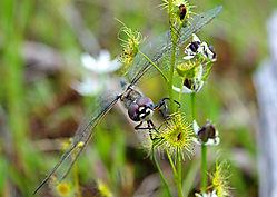 Dragonfly331.jpg