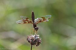Dragonfly38.jpg
