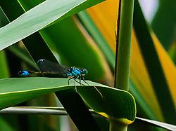 Dragonfly_1-1.jpg
