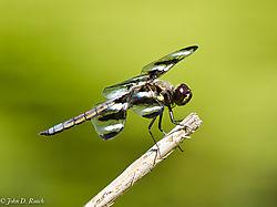 Dragonfly_10-0470.jpg